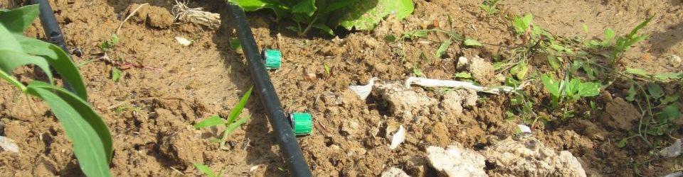 Curso gratuito actividades auxiliares en viveros jardines for Auxiliar jardineria