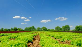 Curso Gratuito Curso de Abonado y Fertilizado en Agricultura Ecológica