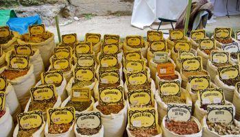Curso Gratuito AGAU0110 Producción de Semillas y Plantas en Vivero (Dirigida a la obtención del Certificado de profesionalidad a través de la acreditacion de las Competencias Profesionales R.D. 1224/2009)