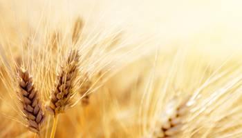 Curso gratuito Actividades Auxiliares en Agricultura (Dirigida a la Acreditación de las Competencias Profesionales R.D. 1224/2009)