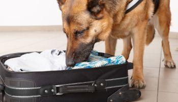 Curso Gratuito Psicología, Educación y Adiestramiento Canino (Titulación Universitaria con 4 Créditos ECTS)