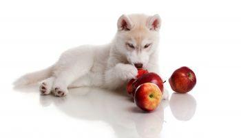 Curso Gratuito Técnico en Adiestramiento de Perros para la Vigilancia y Defensa de Instalaciones