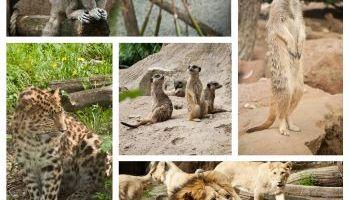 Curso gratuito Cuidador de Parques Zoológicos (Online)