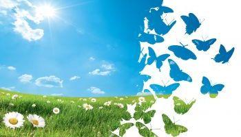 Curso Gratuito Curso de Educación Ambiental