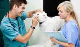 Curso Gratuito Curso de Gestión de Clínicas Veterinarias