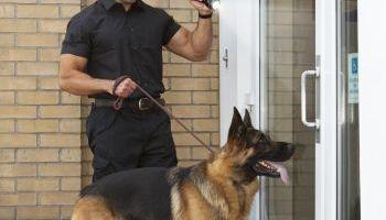 Curso Gratuito Curso Superior en Gestión Policial del Medio Ambiente y el Tratamiento de Residuos