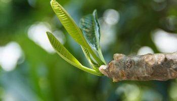 Curso gratuito Curso Online de Técnico en Sistemas de Gestión Ambiental ISO 14001