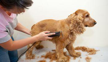Curso Gratuito Curso de Técnico en Peluquería Canina