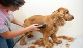 Curso gratuito Curso Profesional de Estética y Peluquería Canina y Felina