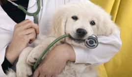 Curso gratuito Curso Técnico en Homeopatía Veterinaria Aplicada