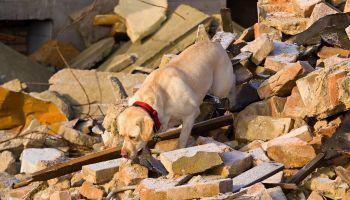 Curso Gratuito Formación Teórica en Terapia Asistida con Perros para Colectivos de Especial Vulnerabilidad (Reconocimiento de Oficialidad por la Administración Pública – ESSSCAN)