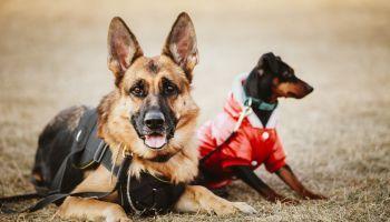 Curso Gratuito Técnico de Unidad Canina de Rescate y Salvamento de Víctimas