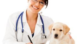 Curso gratuito Máster Business en Medicina Veterinaria