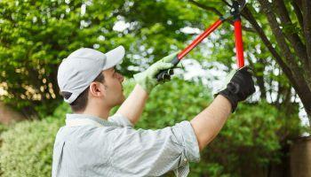 Curso Gratuito Master en Cultivos Herbáceos + Titulación Universitaria