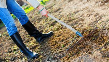 Curso Gratuito Master en Dirección de Explotaciones Ganaderas: Business Management Cattle Raising + Titulación Universitaria