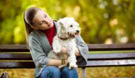Curso Gratuito Master de Encantador de Perros: Experto en Adiestramiento, Psicología y Modificación de Conducta Canina