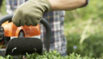 Curso Gratuito Master en Instalación y Mantenimiento de Jardines y Zonas Verdes + Titulación Universitaria