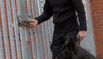 Curso Gratuito Máster en Unidad Canina de Intervención: Experto en Rastreo, Salvamento de Personas y Detección e Intervención con Drogas y Explosivos