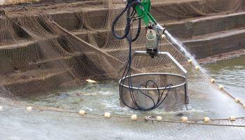 Curso gratuito Preparación y Venta de Pescados (Online)