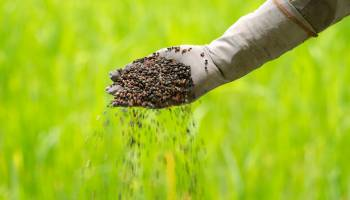 Curso gratuito Operaciones Básicas para el Mantenimiento de Jardines, Parques y Zonas Verdes (Online)