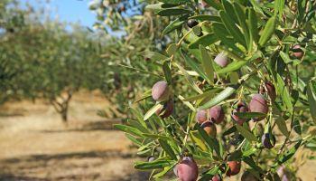 Curso gratuito Operaciones Culturales y Recolección de la Fruta (Online)