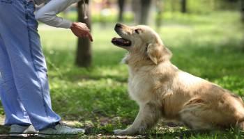 Curso Gratuito MF1741_2 Técnicas de Adiestramiento de Base Aplicadas a Perros (A Distancia)
