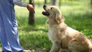 Curso Gratuito MF1741_2 Técnicas de Adiestramiento de Base Aplicadas a Perros