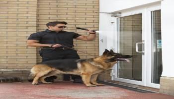 Curso Gratuito MF1757_3 Adiestramiento de Perros para Detección, Búsqueda, Salvamento y Rescate de Víctimas