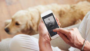 Curso Gratuito MF1757_3 Adiestramiento de Perros para Detección, Búsqueda, Salvamento y Rescate de Víctimas (Online)