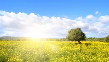 Curso Gratuito Monitor de Medio Ambiente y Gestión Ambiental + Monitor de Educación Ambiental (Doble Titulación + 4 Créditos ECTS)