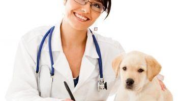 Curso Gratuito Monitor en Terapia Asistida con Perros