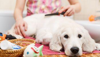 Curso Gratuito Curso de Cuidador Canino para Trabajar en Residencias Caninas