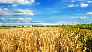 Curso gratuito Operaciones Auxiliares de Abonado y Aplicación de Tratamientos en Cultivos Agrícolas