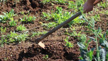 Curso gratuito Labores Culturales y Recolección de los Cultivos Ecológicos (Online)