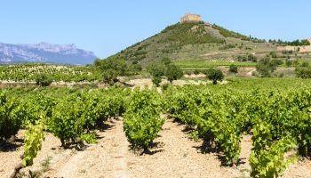 Curso Gratuito UF0935 Viticultura