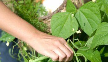 Curso Gratuito UF0967 Recolección de Frutos, Semillas, Plantas y Otros Productos Comercializables (Online)