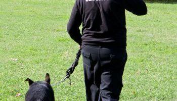 Curso Gratuito UF2740 Adiestramiento de Perros en Operaciones de Rastreo de Personas y/o Indicios Personales, sobre una Pista Olorosa o Sucesión de Huellas e Indicios Prefijada (Online)