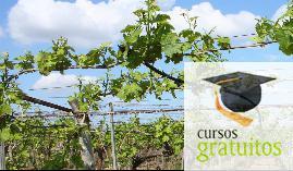 Cursos gratuitos Cultivos Herbáceos Agac0108