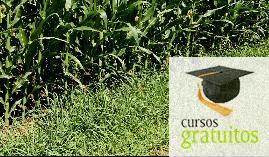 Cursos gratuitos Producción De Semillas Y Plantas En Vivero Agau0110